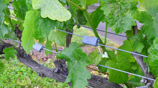Wire joiner for grape trainers